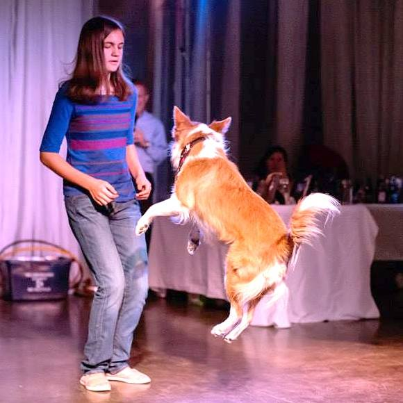dog shows for kids parties in tampa bay